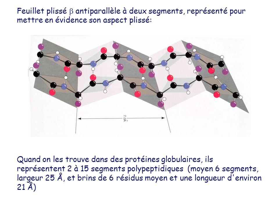 Quand on les trouve dans des protéines globulaires, ils représentent 2 à 15 segments polypeptidiques (moyen 6 segments, largeur 25 Å, et brins de 6 ré