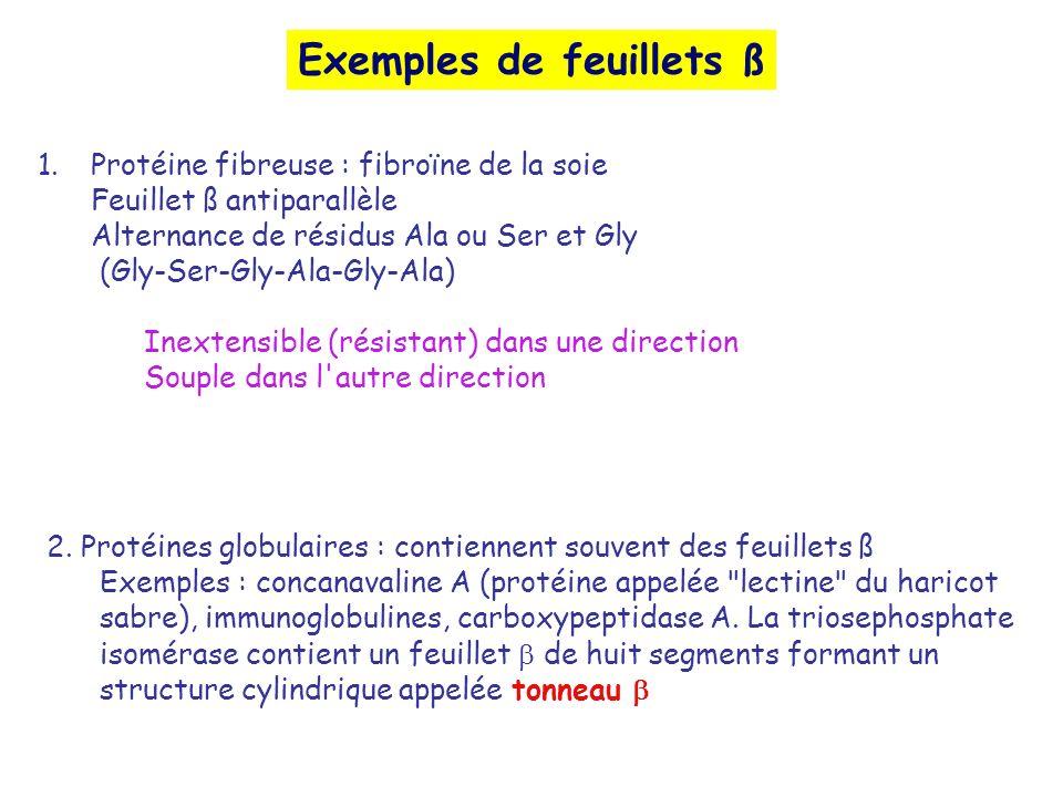 Exemples de feuillets ß 1.Protéine fibreuse : fibroïne de la soie Feuillet ß antiparallèle Alternance de résidus Ala ou Ser et Gly (Gly-Ser-Gly-Ala-Gl
