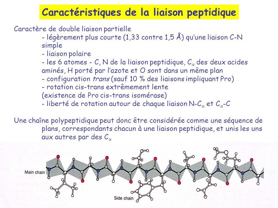 Caractéristiques de la liaison peptidique Caractère de double liaison partielle - légèrement plus courte (1,33 contre 1,5 Å) quune liaison C-N simple
