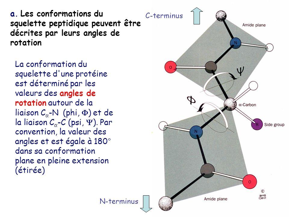 a. Les conformations du squelette peptidique peuvent être décrites par leurs angles de rotation La conformation du squelette d'une protéine est déterm