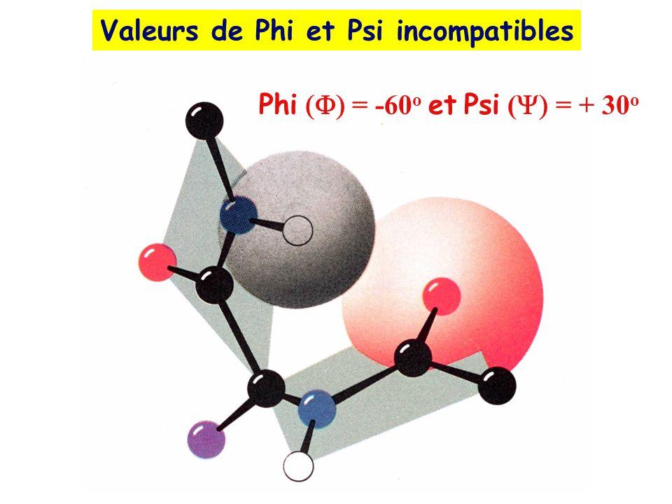Valeurs de Phi et Psi incompatibles Phi = -60 o et Psi ( = + 30 o