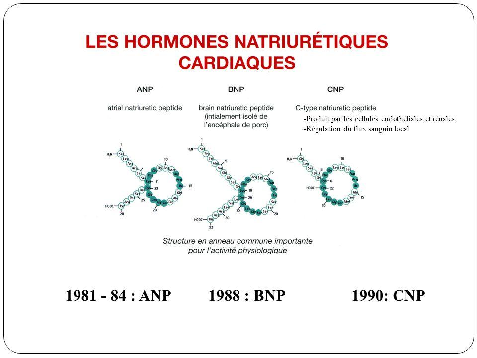 1981 - 84 : ANP1988 : BNP1990: CNP -Produit par les cellules endothéliales et rénales -Régulation du flux sanguin local