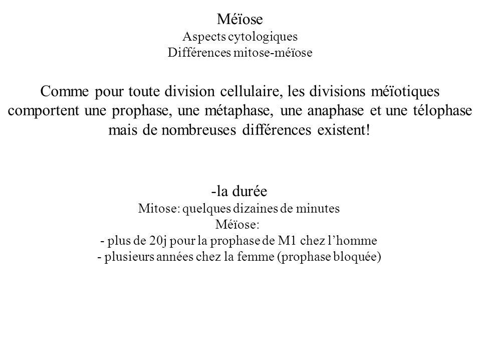 Méïose Aspects cytologiques Différences mitose-méïose Comme pour toute division cellulaire, les divisions méïotiques comportent une prophase, une méta