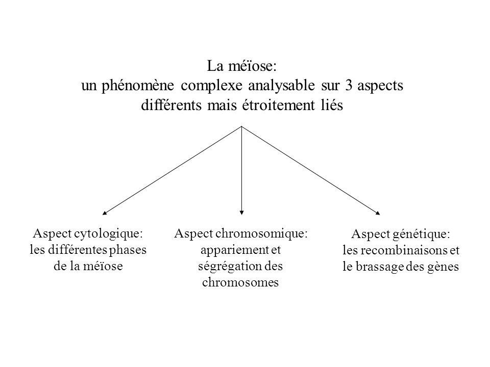 La méïose: un phénomène complexe analysable sur 3 aspects différents mais étroitement liés Aspect cytologique: les différentes phases de la méïose Asp