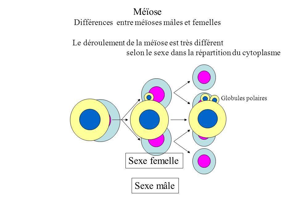 Le déroulement de la méïose est très différent selon le sexe dans la répartition du cytoplasme Sexe mâle Méïose Différences entre méïoses mâles et fem