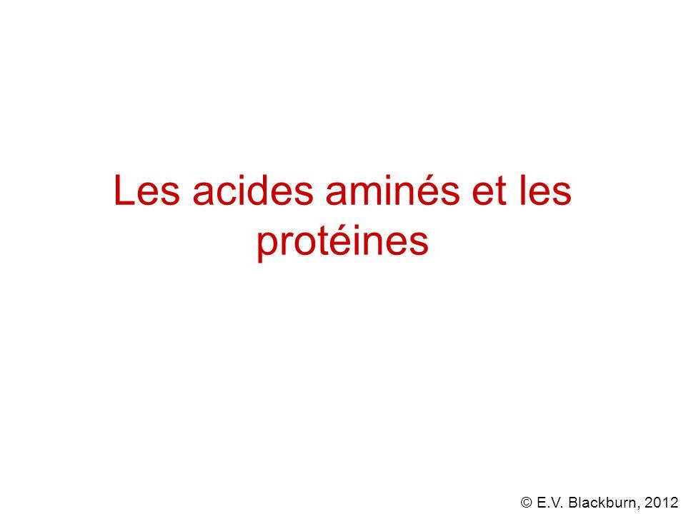 © E.V. Blackburn, 2012 Les acides aminés et les protéines