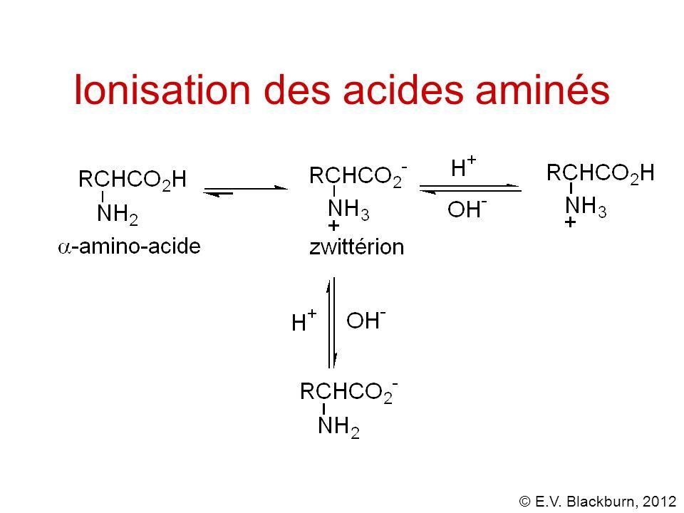 © E.V. Blackburn, 2012 Ionisation des acides aminés