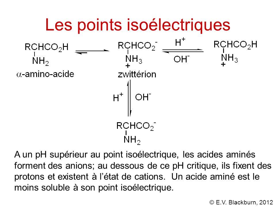 © E.V. Blackburn, 2012 A un pH supérieur au point isoélectrique, les acides aminés forment des anions; au dessous de ce pH critique, ils fixent des pr