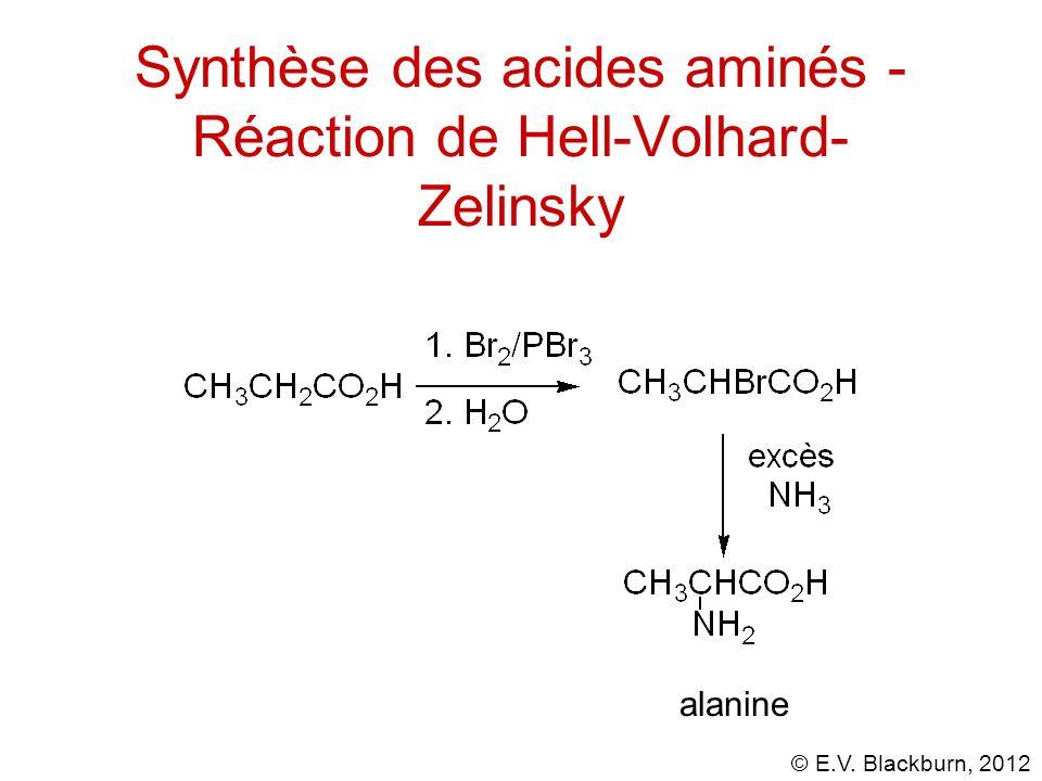 © E.V. Blackburn, 2012 Synthèse des acides aminés - Réaction de Hell-Volhard- Zelinsky alanine