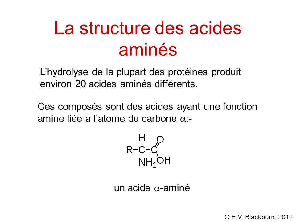 © E.V. Blackburn, 2012 Lhydrolyse de la plupart des protéines produit environ 20 acides aminés différents. un acide -aminé La structure des acides ami