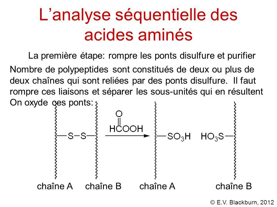 © E.V. Blackburn, 2012 Lanalyse séquentielle des acides aminés La première étape: rompre les ponts disulfure et purifier Nombre de polypeptides sont c