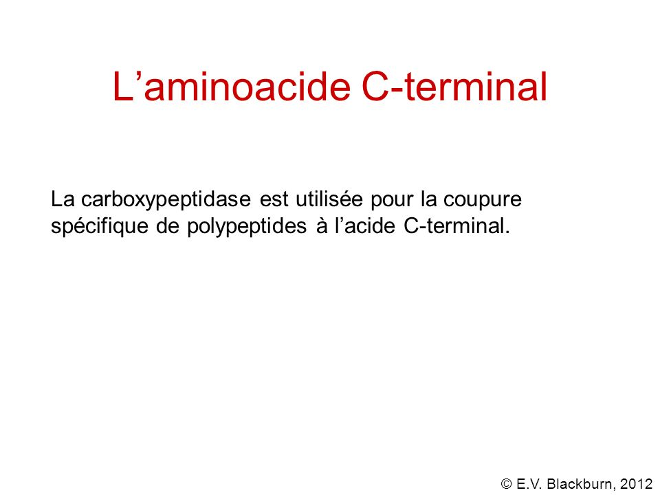 © E.V. Blackburn, 2012 Laminoacide C-terminal La carboxypeptidase est utilisée pour la coupure spécifique de polypeptides à lacide C-terminal.