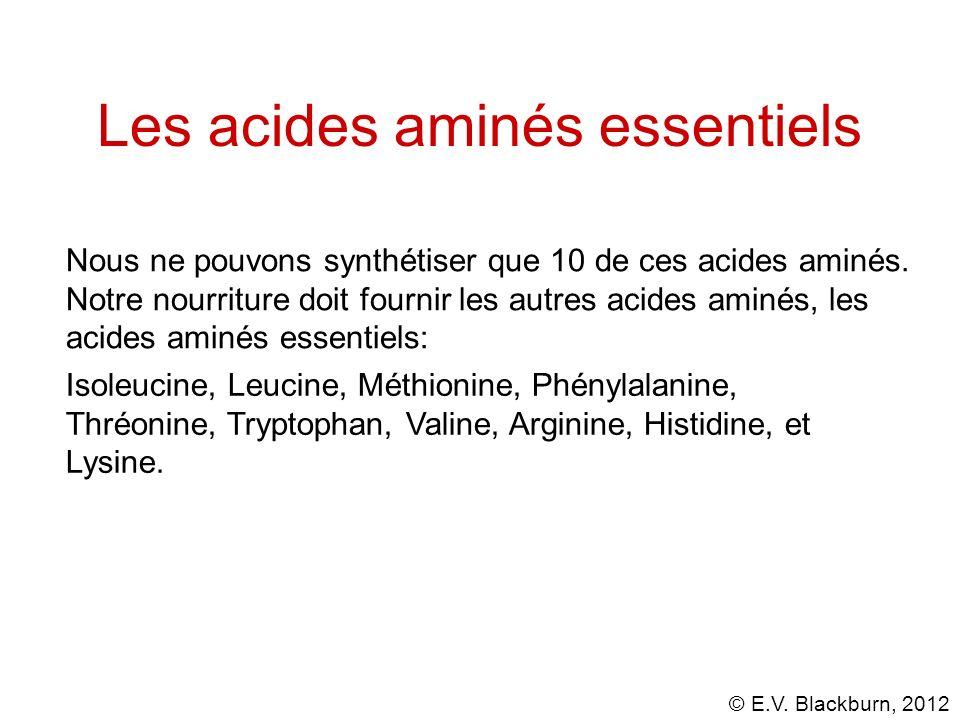 © E.V. Blackburn, 2012 Les acides aminés essentiels Isoleucine, Leucine, Méthionine, Phénylalanine, Thréonine, Tryptophan, Valine, Arginine, Histidine