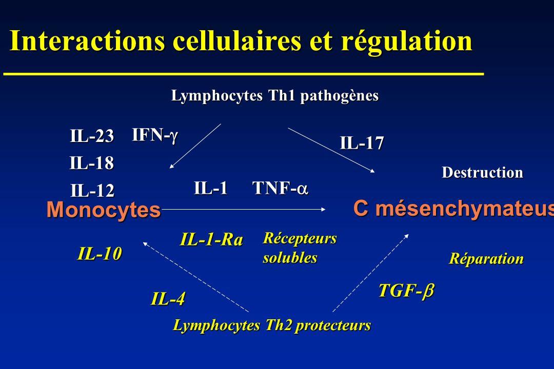 Monocytes C mésenchymateuses Lymphocytes Th1 pathogènes Lymphocytes Th2 protecteurs IL-17 IFN- IFN- IL-1 TNF- TNF- IL-1-Ra IL-10 IL-4 Récepteurssolubl