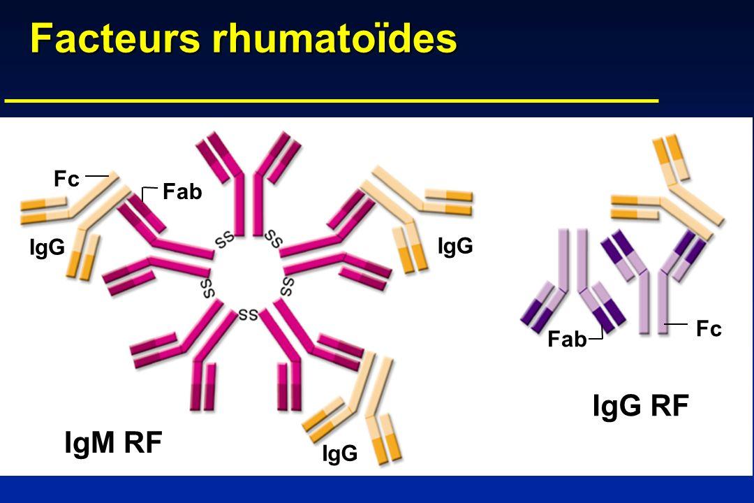Facteurs rhumatoïdes IgG IgG RF IgM RF Fc Fab