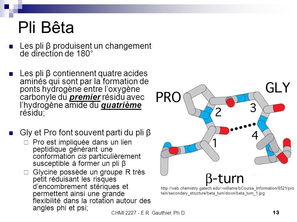CHMI 2227 - E.R. Gauthier, Ph.D.13 Pli Bêta Les pli β produisent un changement de direction de 180° Les pli β contiennent quatre acides aminés qui son