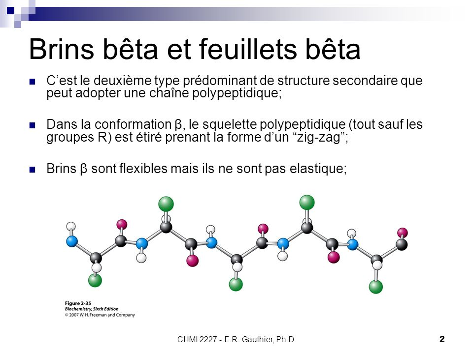 CHMI 2227 - E.R. Gauthier, Ph.D.2 Brins bêta et feuillets bêta Cest le deuxième type prédominant de structure secondaire que peut adopter une chaîne p