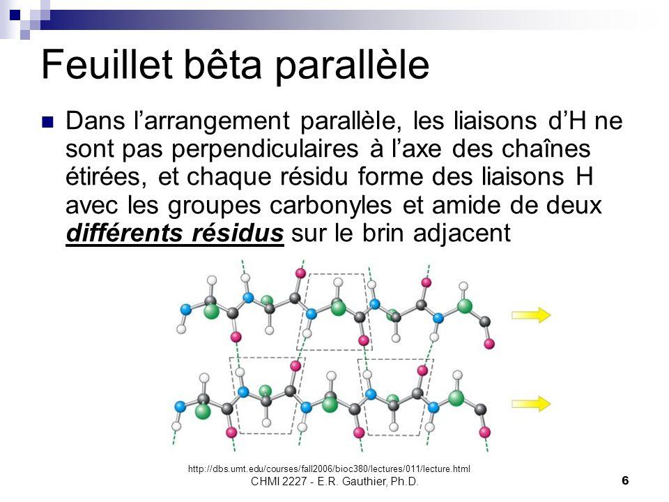 CHMI 2227 - E.R. Gauthier, Ph.D.6 Feuillet bêta parallèle Dans larrangement parallèle, les liaisons dH ne sont pas perpendiculaires à laxe des chaînes