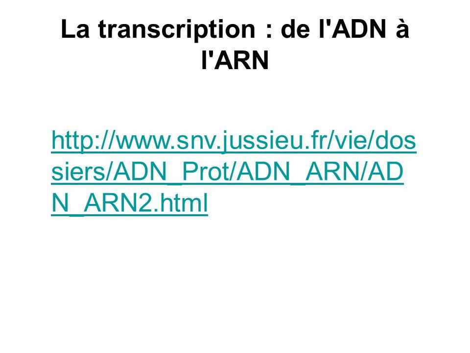 http://www.snv.jussieu.fr/vie/dos siers/ADN_Prot/ADN_ARN/AD N_ARN2.html La transcription : de l'ADN à l'ARN