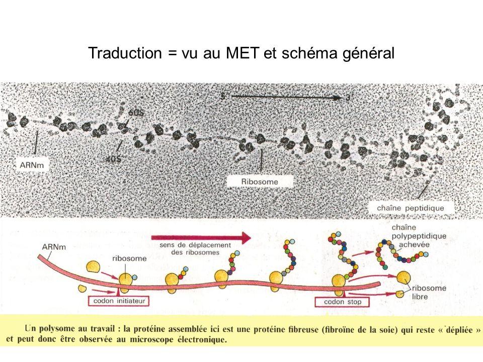 Traduction = vu au MET et schéma général
