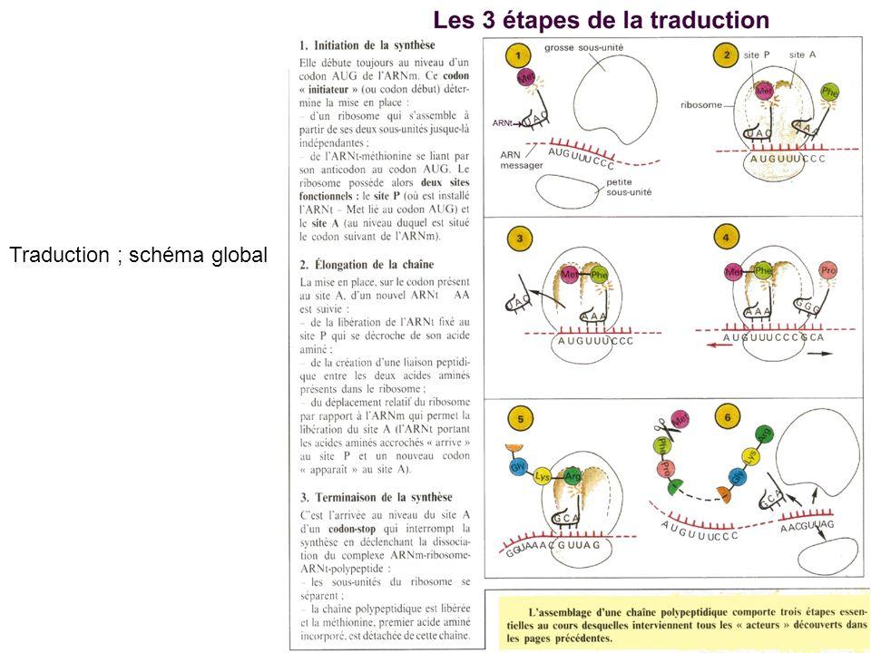 Traduction ; schéma global