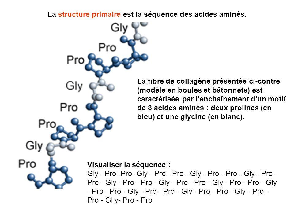 La structure primaire est la séquence des acides aminés. La fibre de collagène présentée ci-contre (modèle en boules et bâtonnets) est caractérisée pa