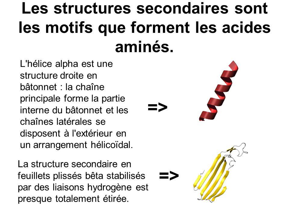 Les structures secondaires sont les motifs que forment les acides aminés. L'hélice alpha est une structure droite en bâtonnet : la chaîne principale f