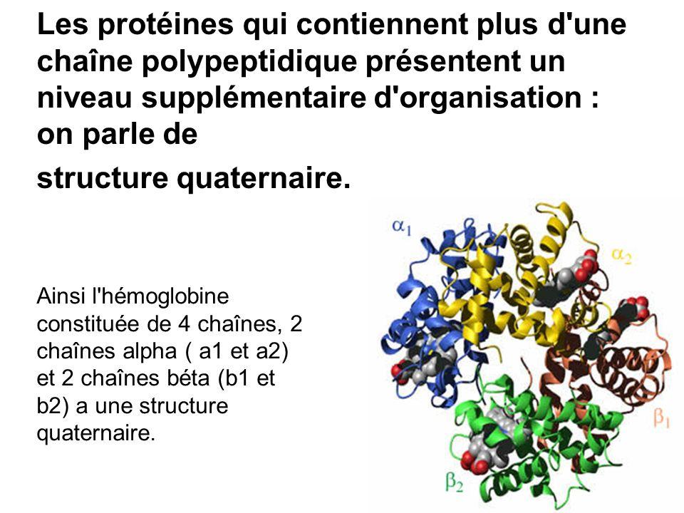 Les protéines qui contiennent plus d'une chaîne polypeptidique présentent un niveau supplémentaire d'organisation : on parle de structure quaternaire.