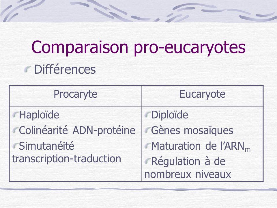 Comparaison pro-eucaryotes Différences ProcaryteEucaryote Haploïde Colinéarité ADN-protéine Simutanéité transcription-traduction Diploïde Gènes mosaïq