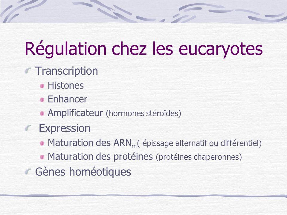 Régulation chez les eucaryotes Transcription Histones Enhancer Amplificateur (hormones stéroïdes) Expression Maturation des ARN m ( épissage alternati