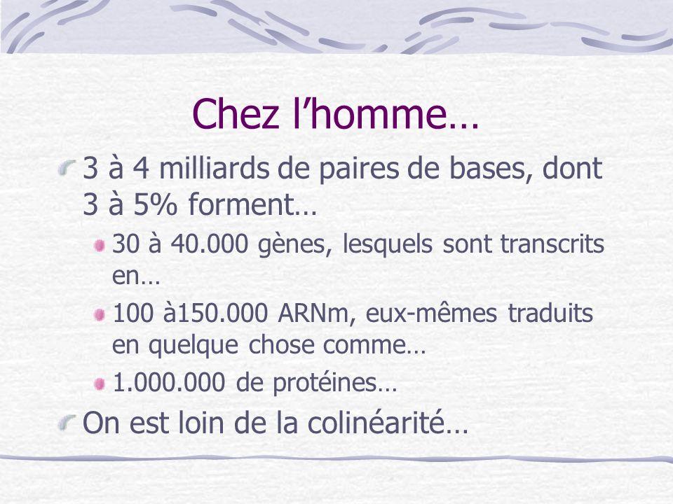 Chez lhomme… 3 à 4 milliards de paires de bases, dont 3 à 5% forment… 30 à 40.000 gènes, lesquels sont transcrits en… 100 à150.000 ARNm, eux-mêmes tra