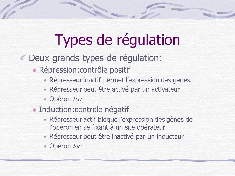 Types de régulation Deux grands types de régulation: Répression:contrôle positif Répresseur inactif permet lexpression des gènes. Répresseur peut être