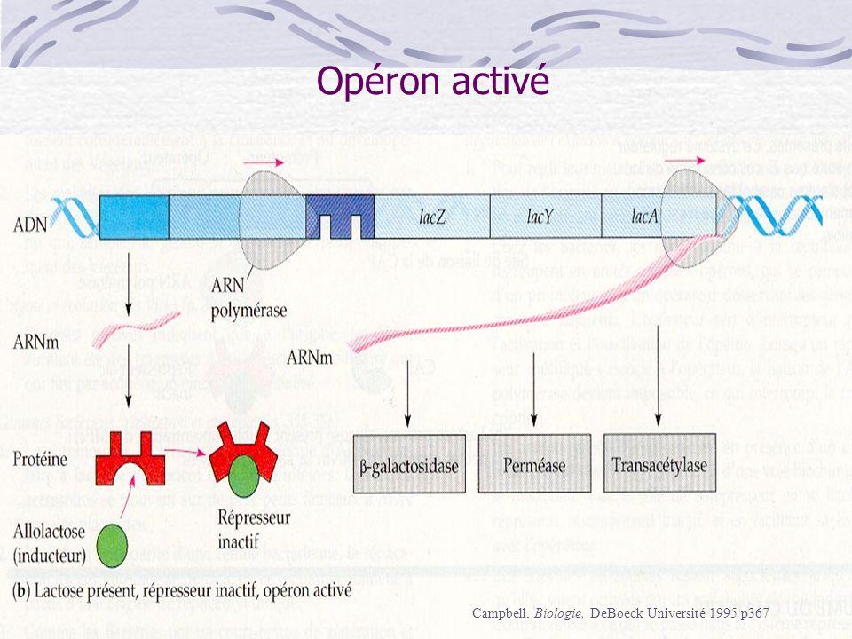Opéron activé Campbell, Biologie, DeBoeck Université 1995 p367