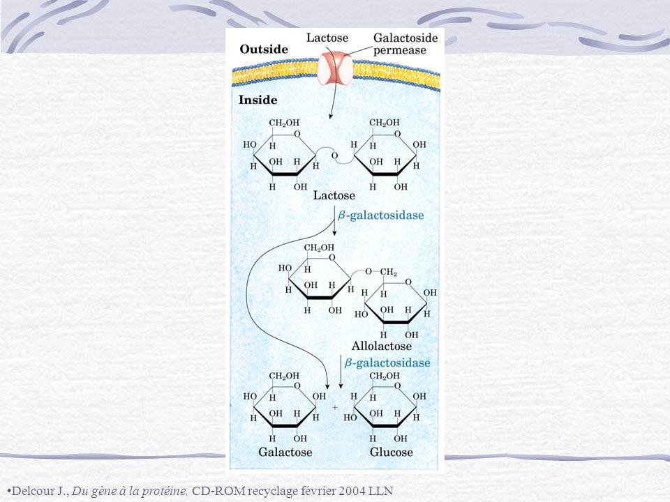 Mutation dun gène homéotique : remplacement du balancier par une paire dailes (Tavernier-Lizeaux, Science de la vie et de la terre Term S, Bordas 1994p352)