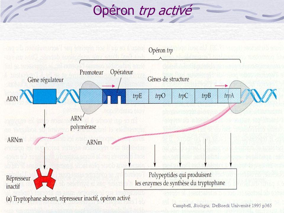 Opéron trp Campbell, Biologie, DeBoeck Université 1995 p365