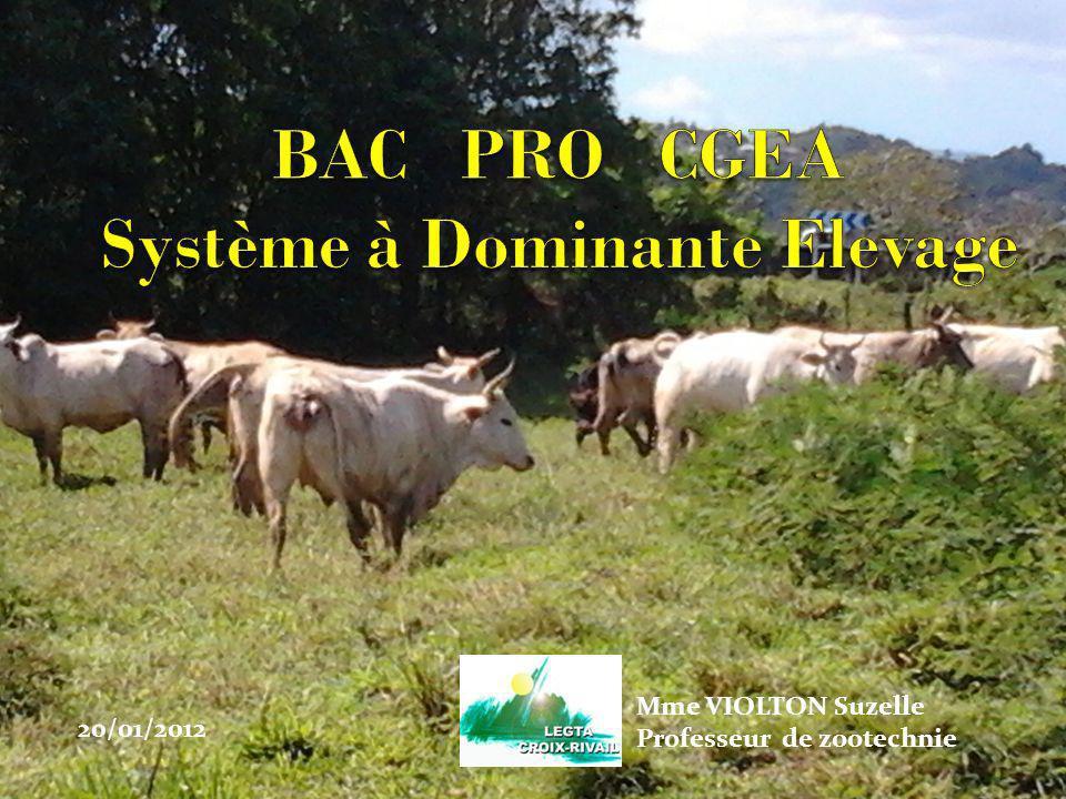 Objectifs: Ce BAC professionnel vise à former des éleveurs spécialisés: Capable de conduire des élevages (bovins, porcins, ovins, avicoles), Formés à exercer des fonctions de techniciens dans des organismes professionnels