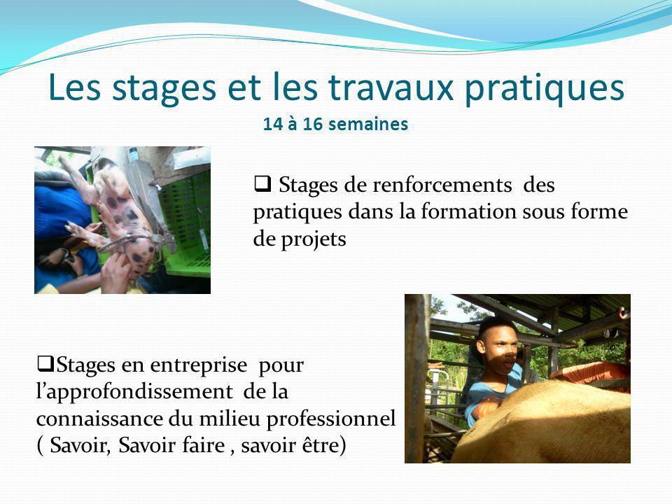 Les stages et les travaux pratiques 14 à 16 semaines Stages de renforcements des pratiques dans la formation sous forme de projets Stages en entrepris
