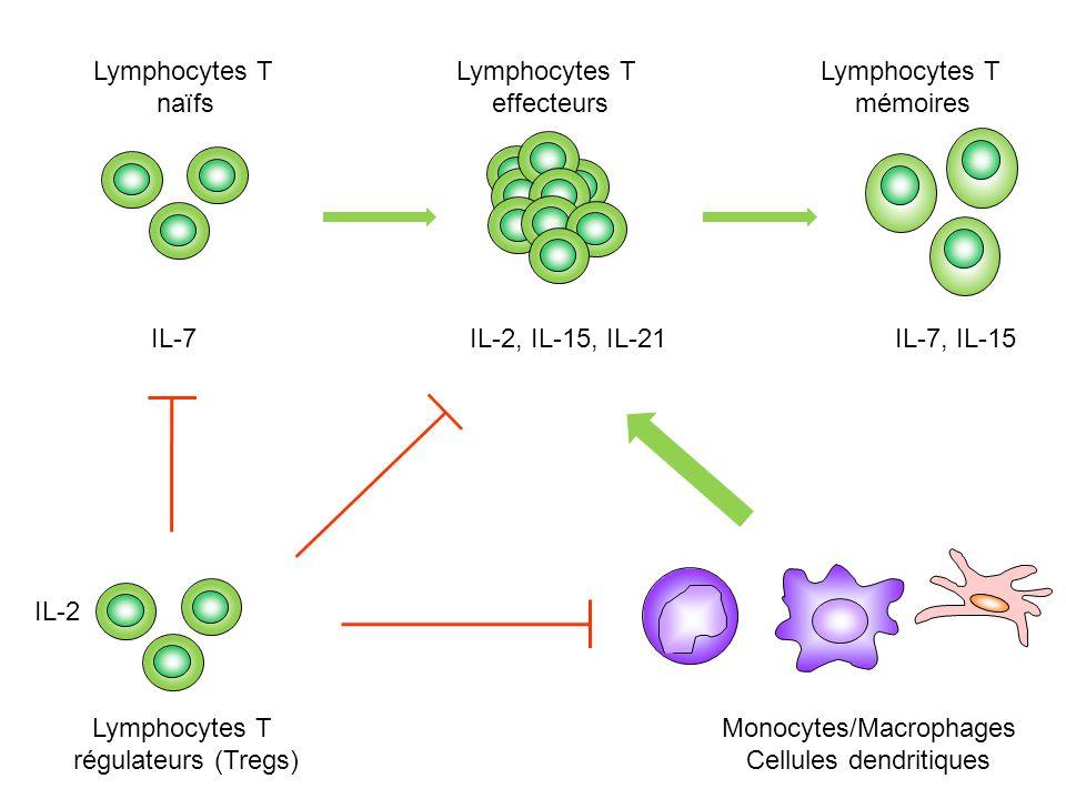 Lymphocytes T naïfs Lymphocytes T effecteurs Lymphocytes T mémoires IL-7 Lymphocytes T régulateurs (Tregs) Monocytes/Macrophages Cellules dendritiques