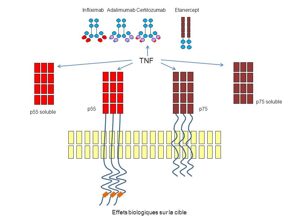 Effets biologiques sur la cible p55 p75 TNF p55 soluble p75 soluble EtanerceptInfliximab Adalimumab Certilozumab