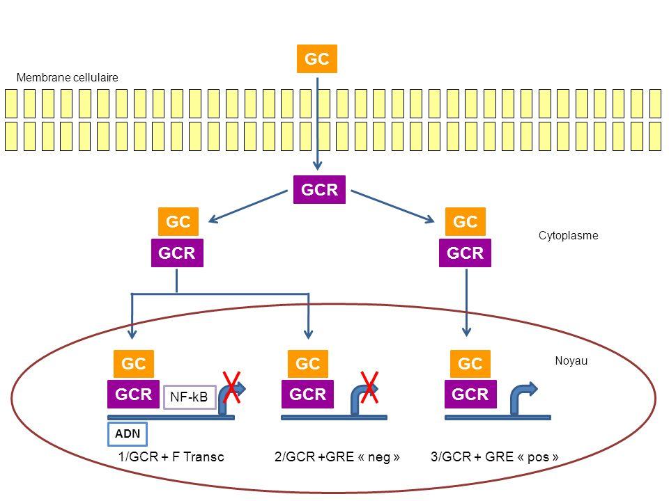 GC GCR NF-kB ADN 1/GCR + F Transc2/GCR +GRE « neg »3/GCR + GRE « pos » Membrane cellulaire Cytoplasme Noyau