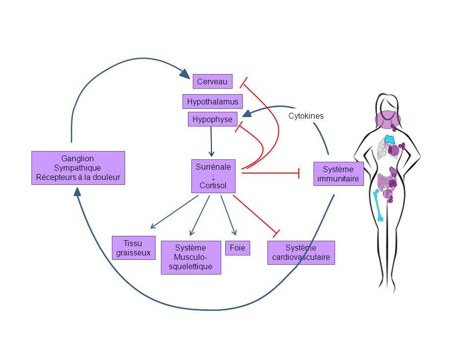 Ganglion Sympathique Récepteurs à la douleur Tissu graisseux Système Musculo- squelettique FoieSystème cardiovasculaire Surrénale Cortisol Cerveau Hyp