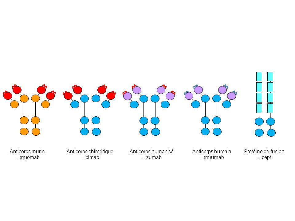 Anticorps murin …(m)omab Anticorps chimérique …ximab Anticorps humanisé …zumab Anticorps humain …(m)umab Protéine de fusion …cept