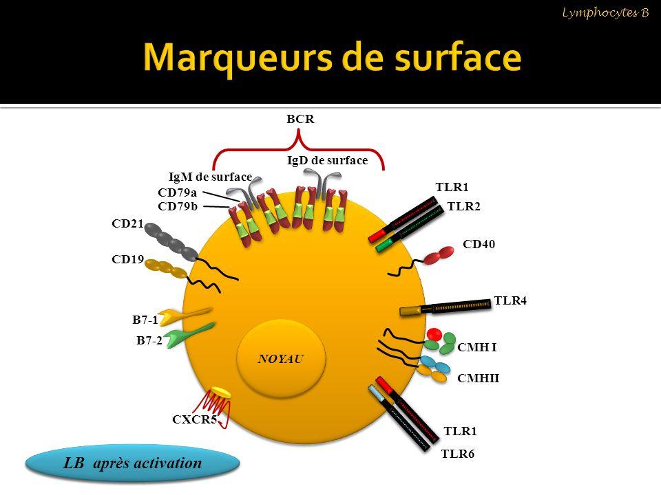 NOYAU B7-1 B7-2 CXCR5 CMH I CMHII CD19 CD21 CD40 CD79b CD79a IgM de surface LB au repos LB après activation IgD de surface BCR TLR1 TLR2 TLR4 TLR6 TLR