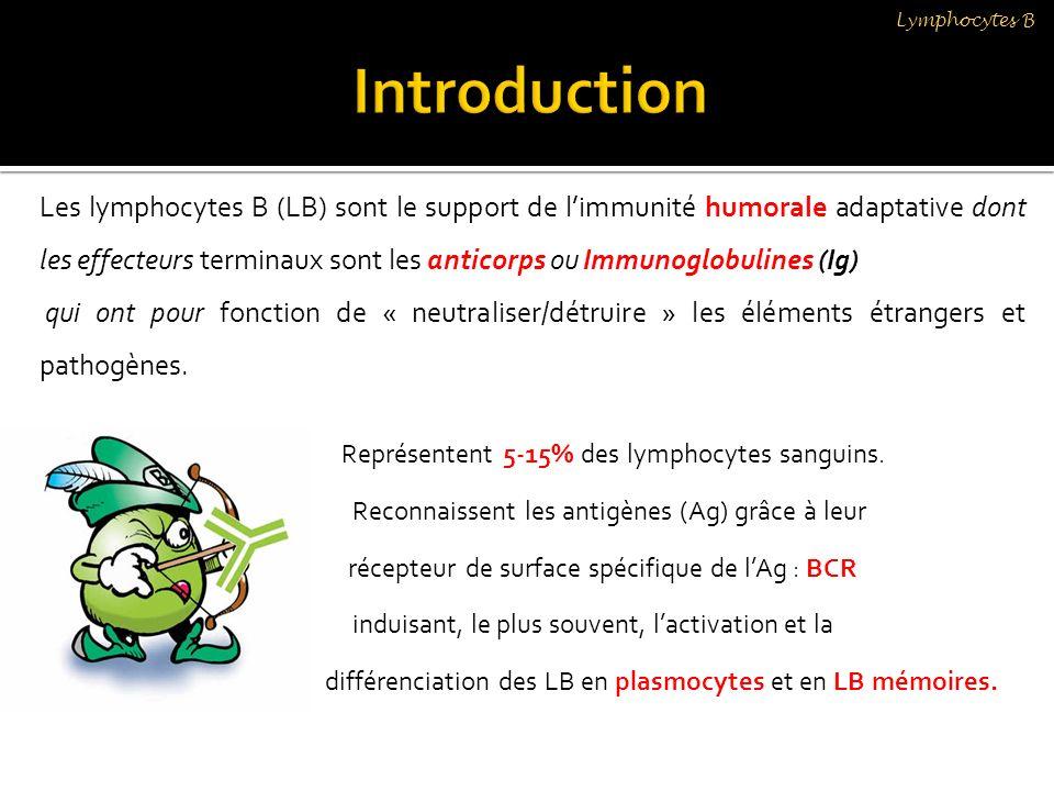 Lymphocytes B En fait, chaque BCR est un complexe membranaire comprenant: - une Ig (M, D, G A ou E) monomérique ancrée dans la membrane - un module de transmission du signal qui est un hétérodimère CD79α (Igα) / CD79β (Igβ Chaque LB exprime environ 100 000 copies dun même BCR, chaque LB est spécifique dun motif Ag Augmenter la diversité des BCR pour étendre le répertoire B: être en mesure de reconnaître un maximum dAg