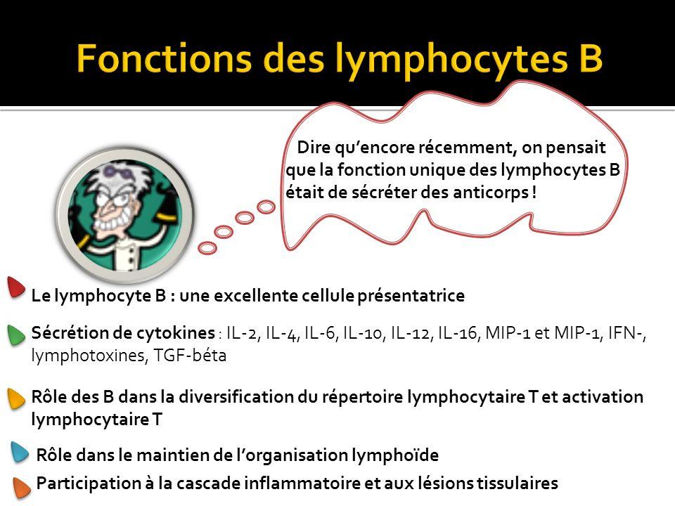 Le lymphocyte B : une excellente cellule présentatrice Dire quencore récemment, on pensait que la fonction unique des lymphocytes B était de sécréter