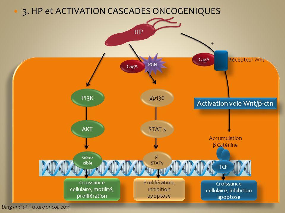 HP PI3K AKT Gène cible Croissance cellulaire, motilité, prolifération gp130 STAT 3 P- STAT3 Prolifération, inhibition apoptose PGN CagA Accumulation β