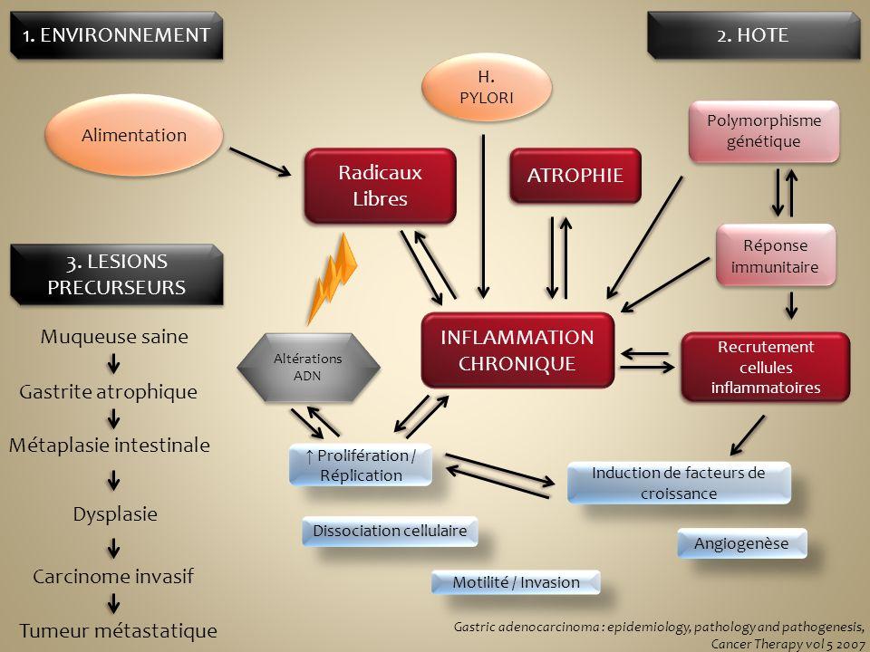 Alimentation H. PYLORI INFLAMMATION CHRONIQUE Polymorphisme génétique Réponse immunitaire Radicaux Libres ATROPHIE Recrutement cellules inflammatoires