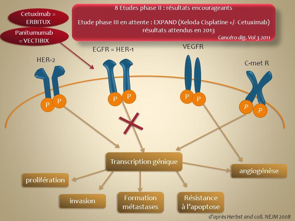 prolifération invasion Formation métastases Résistance à lapoptose Cetuximab = ERBITUX Panitumumab = VECTIBIX Essai phase III : REAL3 1 e phase négati