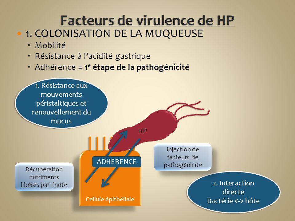 1. COLONISATION DE LA MUQUEUSE Mobilité Résistance à lacidité gastrique Adhérence = 1 e étape de la pathogénicité Cellule épithéliale 1. Résistance au