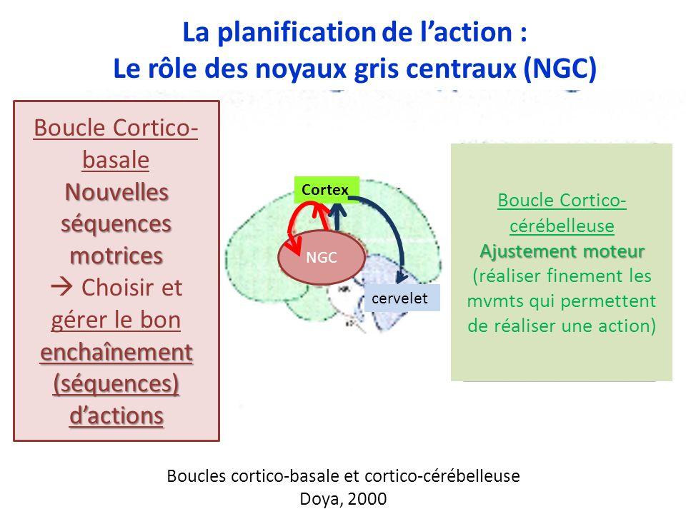 13 Boucles cortico-basale et cortico-cérébelleuse Doya, 2000 NGC cervelet Boucle Cortico- basale Nouvelles séquences motrices enchaînement (séquences)
